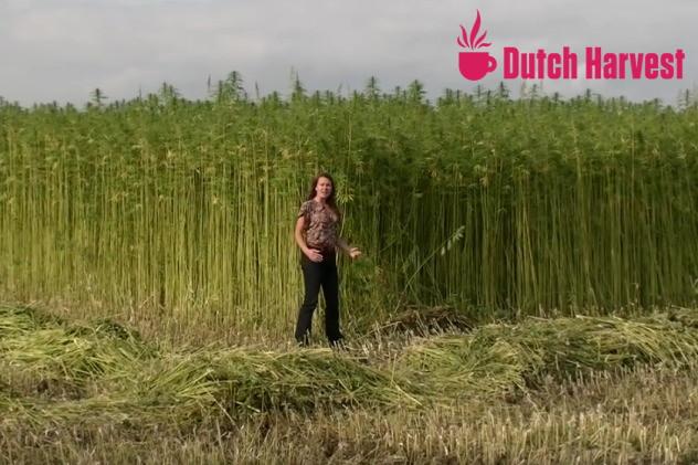 Oogst Dutch Harvest